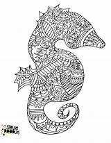 Seahorse Coloring Printable Sheets sketch template