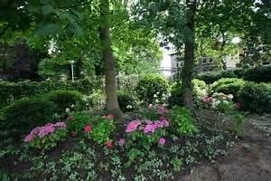 Hortensien Kombinieren Mit Anderen Pflanzen : terrasse mit pflanzen wohnlich gestalten galanet ~ Eleganceandgraceweddings.com Haus und Dekorationen
