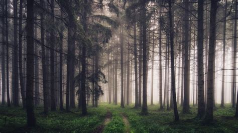 Forest, Trees, Fog, Path, Nature Scenery 640x1136 Iphone 5/5s/5c/se Wallpaper, Background Iphone 6 128gb Nuevo Unlocked Australia Charger Egypt By Default Hdd Case Jb Hi Fi Plus Cu X�ch Tay John Lewis