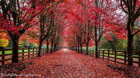 washington state colors amazing washington 5 fall foliage in washington state