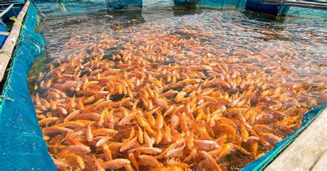 fish farming developing rapidly