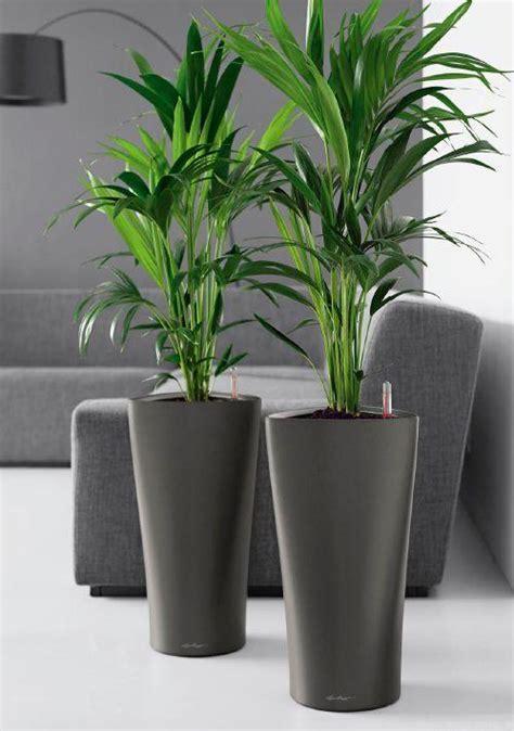 piante ufficio piante da ufficio vendita e comodato d uso