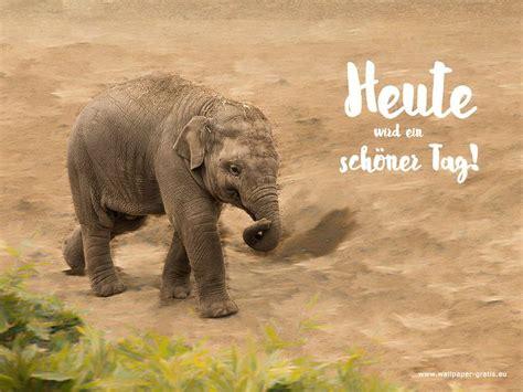 elefant heute ist ein schoener tag lebensweisheiten