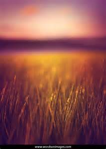 Landscape Photography Samples