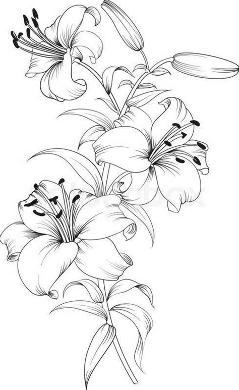 Tiger lilies. Stargazer lilies. Print & color.   Flower