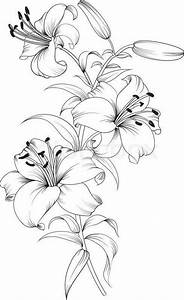 Tiger lilies. Stargazer lilies. Print & color. | Flower ...