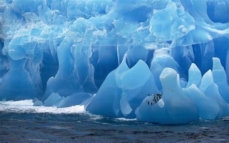 antarctica iceberg birds penguins sea wallpapers hd
