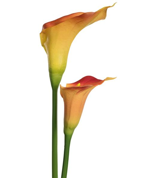 stem calla medium calla lily silk flower stems for casual decorating at petals
