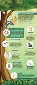 Guide To Purchasing Your Tree Climbing Gear  Infographic