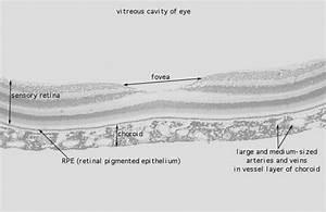 Hls   Eye  Fovea  Low Mag Labeled