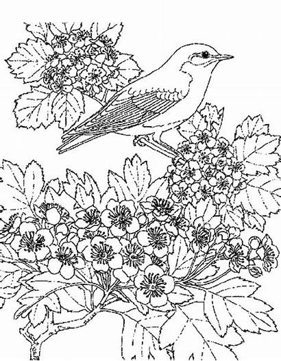 Coloring Pages Scenic Flower Adult Scene Winter