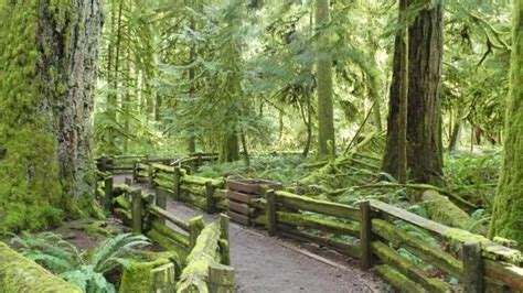 cathedral grove alberni valley chamber  commerce