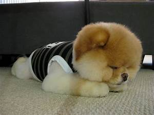 funny pictures cutest dogs in world