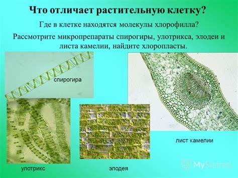 ответ на вопросы биология константинов 7