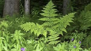 11 Pflanzen Methode : lebensgemeinschaft wald 1 pflanzen und tiere im wald ~ Lizthompson.info Haus und Dekorationen