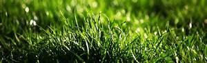 Rasen Richtig Düngen : mehr vom garten wie du wieder mehr aus deinem garten holst ~ Frokenaadalensverden.com Haus und Dekorationen