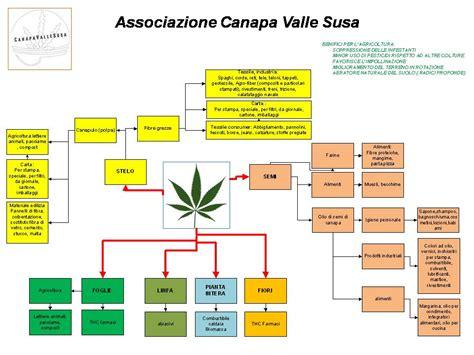 canapé ée 50 canapavallesusa i 50 000 prodotti della canapa