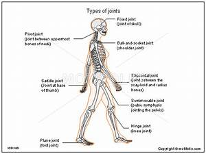 Types Of Joints Illustrations