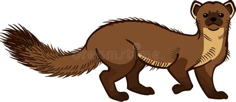 Pine Marten Stock Vector. Image Of Drawing, Hunter, Color