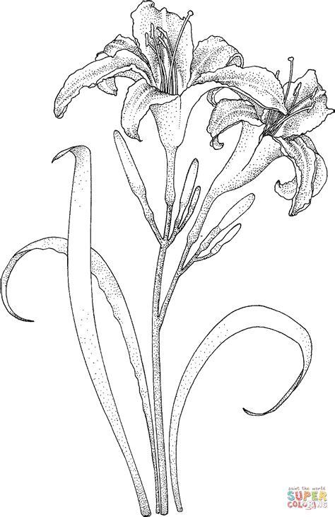 tige de lys avec deux fleurs super coloring image deco