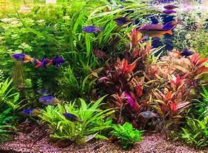 Aquarium Gestaltung Bilder : neues aquarium alles zur planung zooroyal magazin ~ Lizthompson.info Haus und Dekorationen