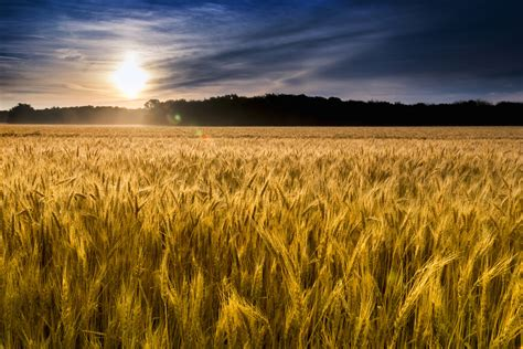 A Wheat Field In Kansas New Beginnings Of The Mind