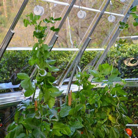 gurken und tomaten im gewächshaus palram rankhilfe tomaten set gew 228 chshaus zubeh 246 r