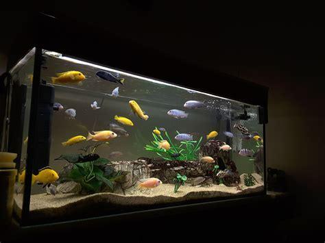 Tips for Aquarium Filter Media Order