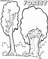 Forest Coloring Pages Print Colorings sketch template