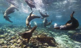 Galapagos Islands Animals