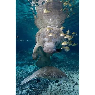 Swim L'wren scott and Fort lauderdale on Pinterest