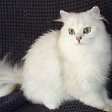 tiffanie cat masterpet