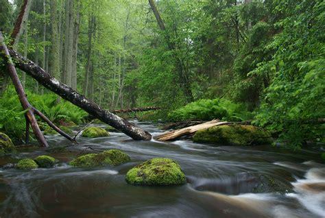 Nature Photography Wikipedia