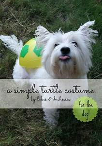 A Simple DIY Turtle Costume for the Dog - Dukes and Duchesses