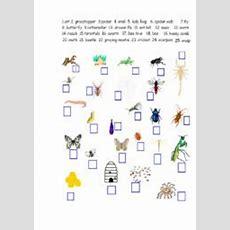 Insects  Worksheet By Natasha Shubina