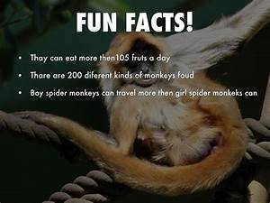 All About Spider Monkeys By Boexx044