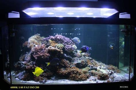 construction 1er aquarium page 3