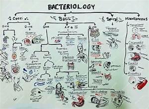 Media Vessel Terminology Microbiology