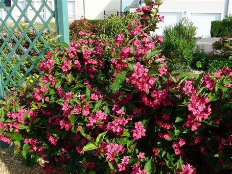 arbuste a fleur tendance au jardin sous ma gloriette