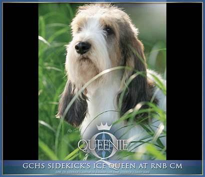 Beverly Hills Kennel Club Dog Mr Joe