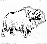 Ox Musk Clipart Illustration Vector Royalty Muskoxen Prawny Background Muskox Clipground Without sketch template