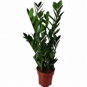 Plante D Intérieur Haute : la fontaine fleurie livraison plante verte compi gne oise ~ Dode.kayakingforconservation.com Idées de Décoration