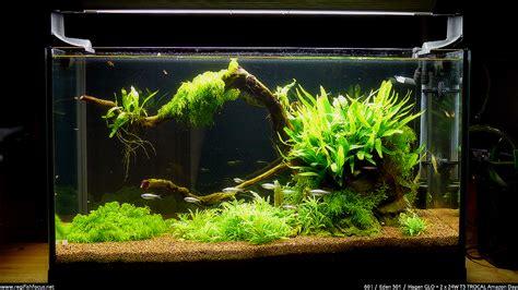 60 litres aquascape avril 2012 171 root 171 regi fish focus