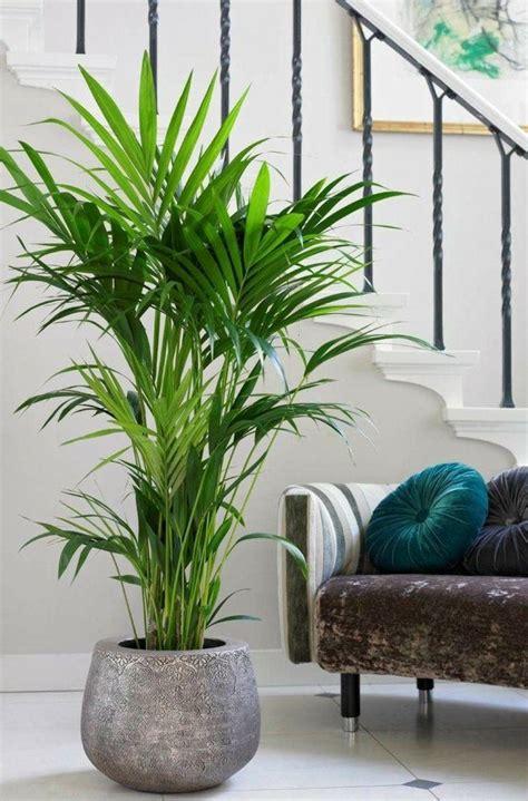 Palmen Für Innen by Die Besten 25 Zimmerpflanzen Ideen Auf Innen