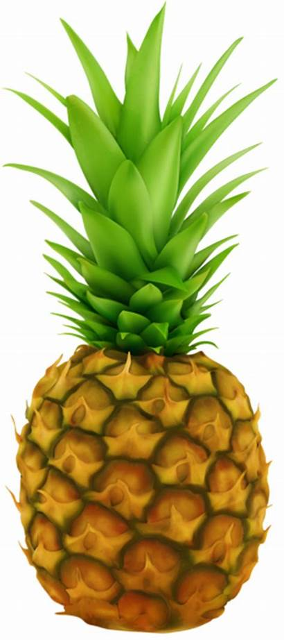 Pineapple Transparent Clip Clipart Fruit Wikiclipart Yopriceville