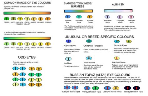 eye cat colours colors chart eyes cats colour genetics range kitten pedigree siamese different yellow brown odd percentage coat why