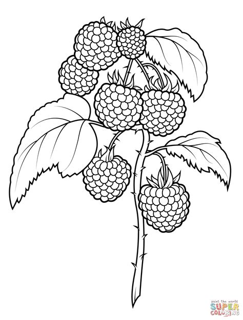 raspberry bush clipart black and white raspberries coloring page free printable coloring pages