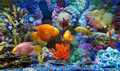tlcharger fond d 39 ecran aquarium poisson poisson coraux