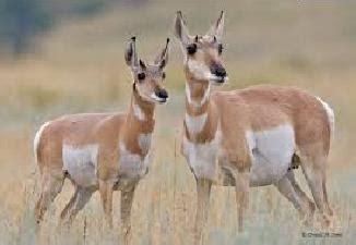 Top 5 ātrākie dzīvnieki uz zemeslodes - Spoki