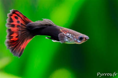 poisson dans un aquarium comment photographier les poissons dans aquarium
